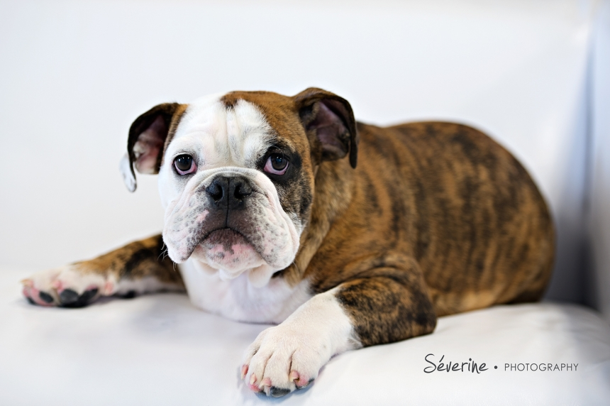 Jacksonville Pet Photography | Severine Photography