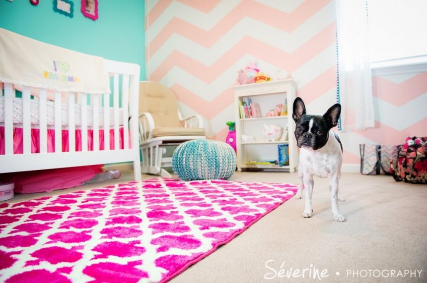 Newborn and dog picture